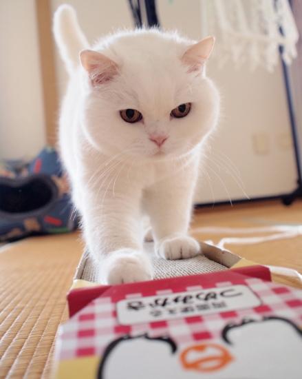 P7032031urabanashi.jpg