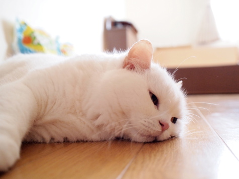 P7142506urabanashi.jpg