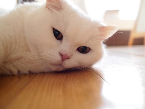 P7142512urabanashi.jpg