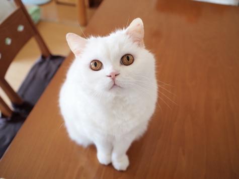 P7152550urabanashi.jpg
