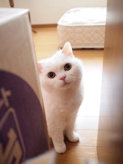 P7162584urabanashi.jpg
