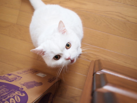 P7162590urabanashi.jpg