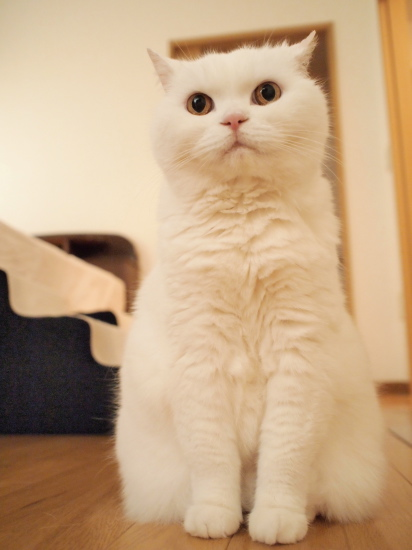 P7182615urabanashi.jpg