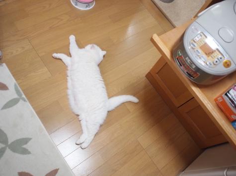 P7242820urabanashi.jpg