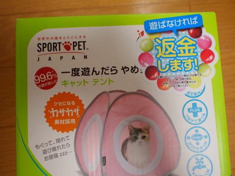 P8143740urabanashi.jpg
