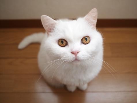 P8183856urabanashi.jpg