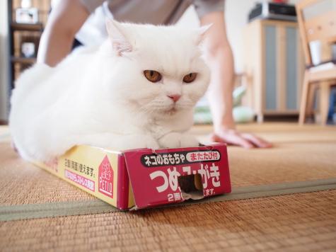 P8264175urabanashi.jpg