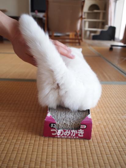 P8264177urabanashi.jpg