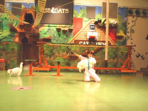 P9094758urabanashi.jpg