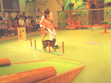 P9094763urabanashi.jpg