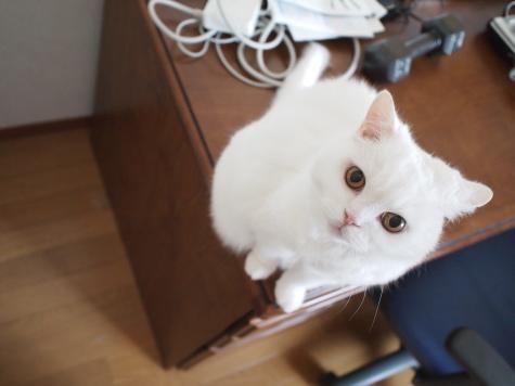 P9124834urabanashi.jpg