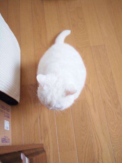 P9134877urabanashi.jpg
