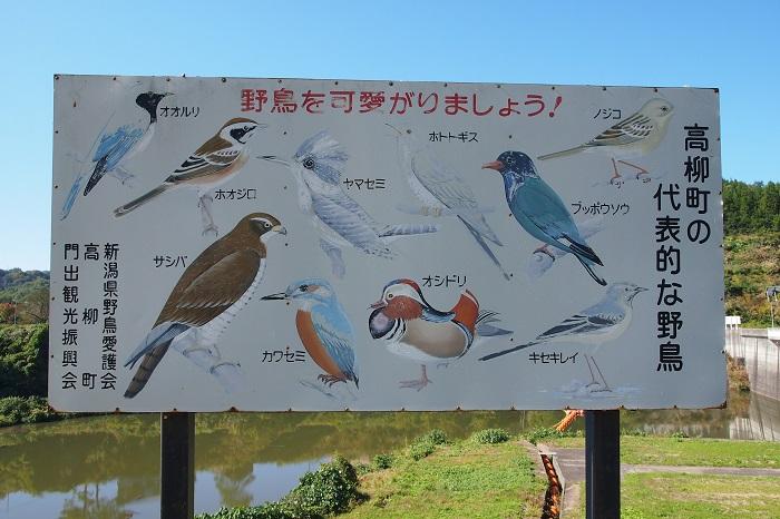 鯖石川20