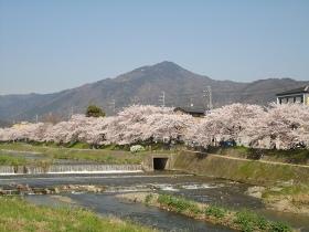 桜の比叡山