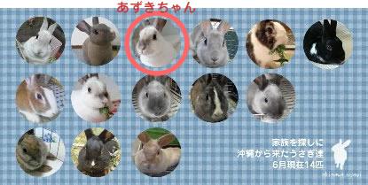 あずきちゃん(オールスターズ)