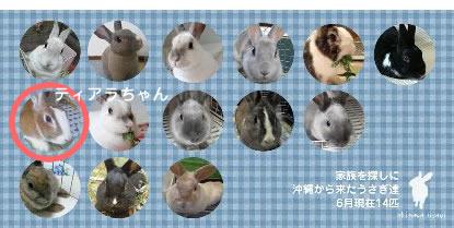 沖縄うさぎオールスターズ