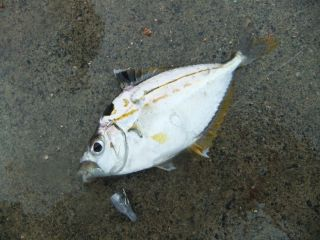 2012 エサ釣り7_320