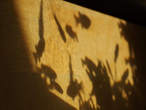 さかなの影