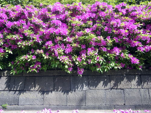 矢来町ハイツの塀