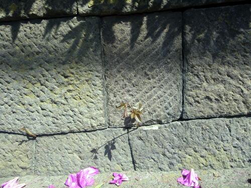 矢来町ハイツの塀の石垣