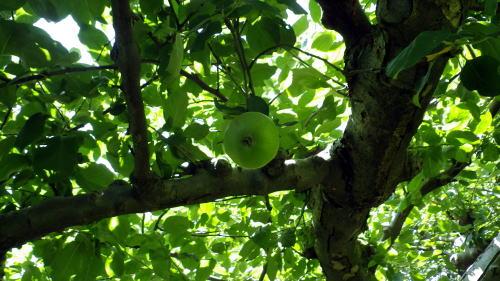 小石川 ニュートンのリンゴ