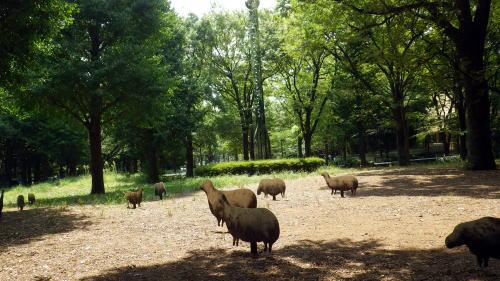 新宿中央公園 羊の作品