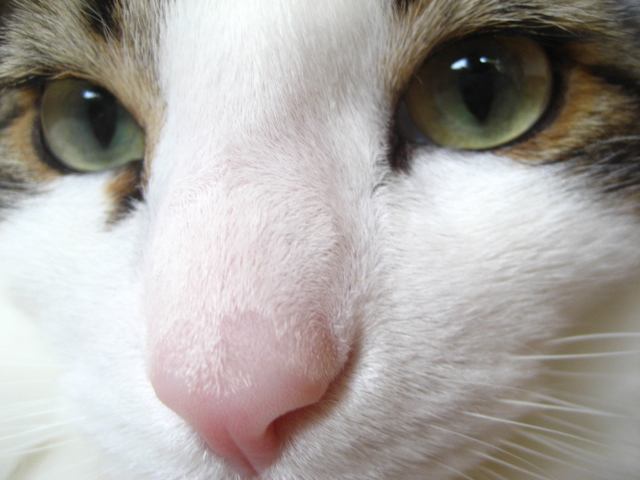 僕の目を見て