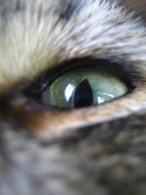 猫の目天気