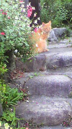 近所の外猫ちゃん