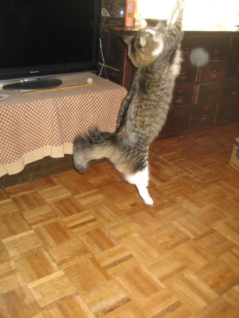 猫カップ2 005