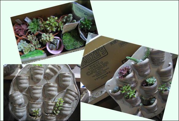 多肉植物テラス 016