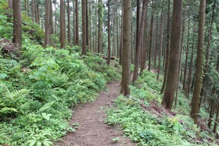 間伐済みの人工林