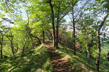 稜線のブナ林
