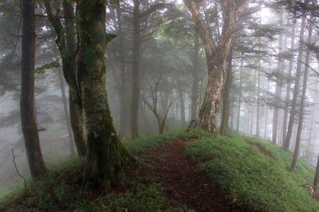 山頂付近の森