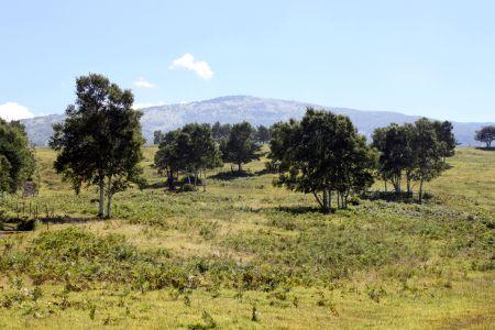 牧場と根子岳
