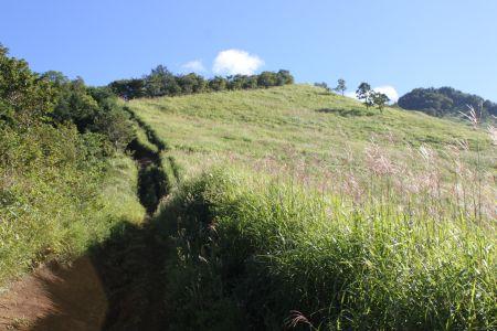 広大な草原