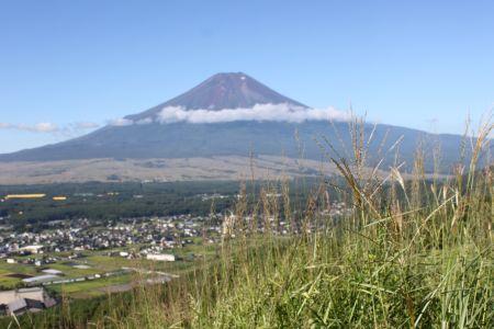 ススキの穂と富士山