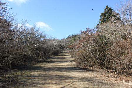 芝生の広い道