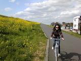 自転車と菜の花