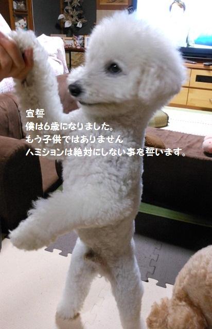 DSCN1157_20120926112622.jpg
