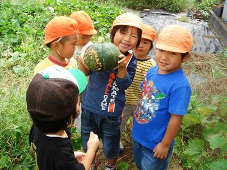 かぼちゃ収穫1