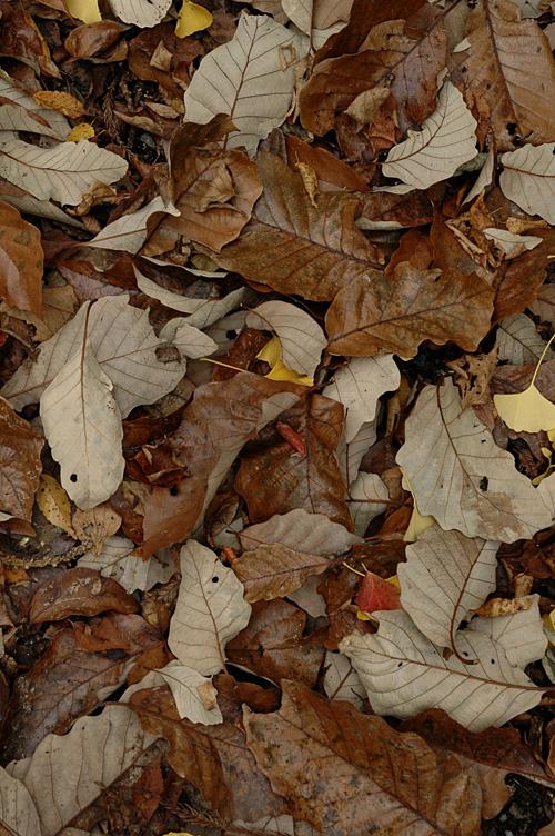 fallen leaves12_11_28_3