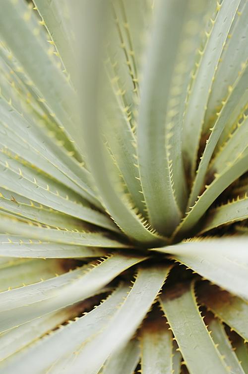 cactus_12_11_28_1.jpg