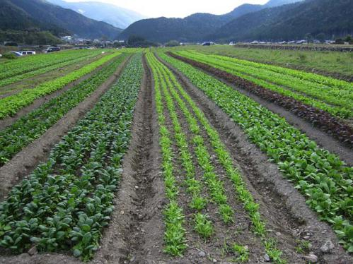 farm_2.jpg
