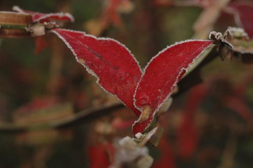 frost_12_12_14_1.jpg