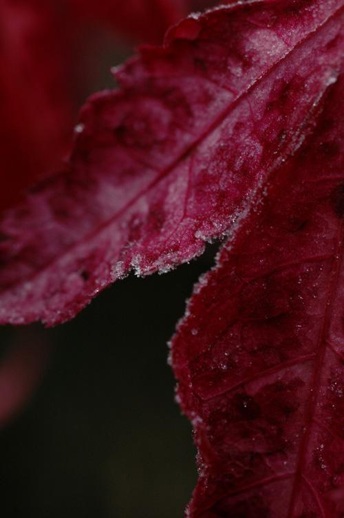 frost_12_12_14_3.jpg