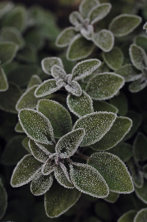 frost_12_12_14_5.jpg