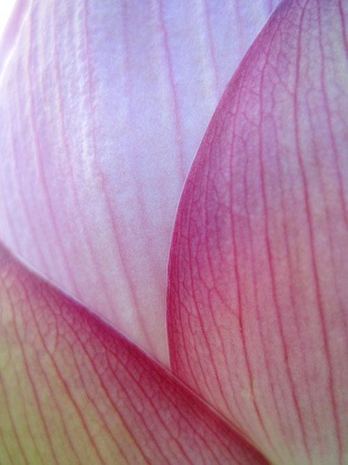 lotus_12_7_23_3.jpg