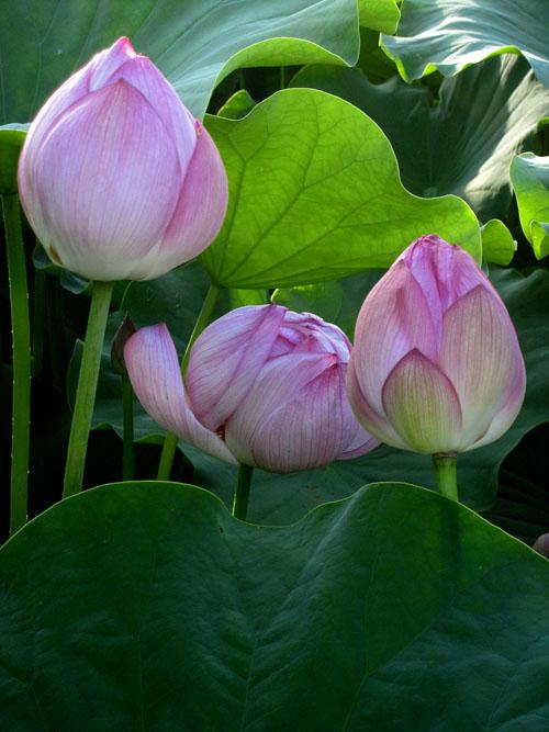 lotus_12_7_23_6.jpg