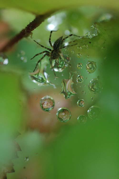 spider_12_7_6_1.jpg